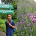 Memetik Bunga Verbena di Gunung Semeru, Bolehkah?