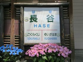 江ノ電長谷駅のアジサイ
