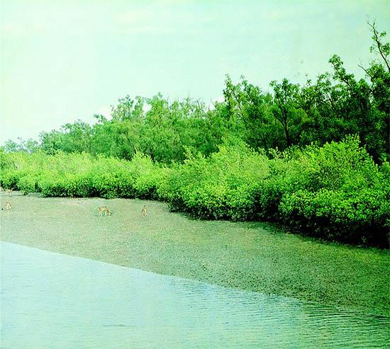 Nature: Sundarban Beauty Of Nature