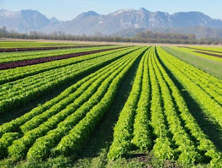 How Can Organic Agriculture Help?