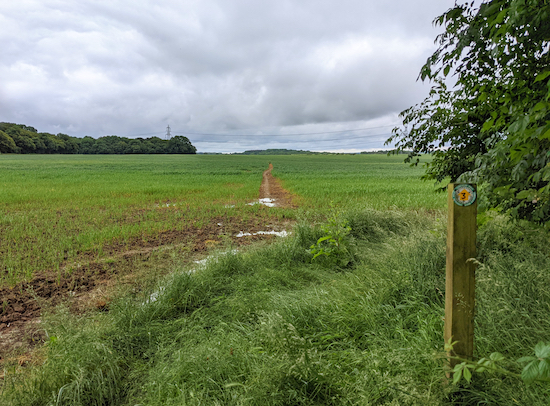 Continue ESE on footpath 3 to a crossing in the middle of the field - point 2