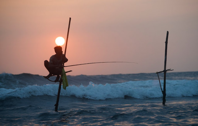 Sri Lankan Fishermen on stilts in the sea