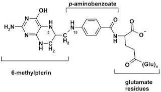 The structure of tetrahydrofolate