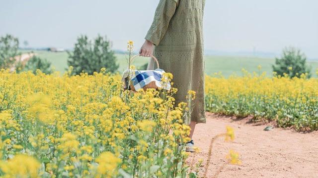 Hoa cải cũng có ý nghĩa đặc biệt với người Hàn Quốc. Cứ đến mùa hè hàng năm, nhiều vùng ở Hàn Quốc sẽ diễn ra lễ hội hoa cải để bày tỏ sự trân trọng và yêu mến của người dân dành cho loài hoa này. Nhiều nơi như Samcheok Maengbang có cả hoa cải và hoa anh đào cùng nở trong một thời điểm.