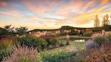 Fotos de bellos jardines premiadas en IGPOTY 14. Beautiful Gardens