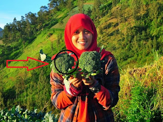 mengatasi-dan-cegah-kanker-dengan-brokoli