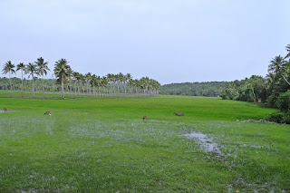 Monsoon in Goa, Goa rains, goa package