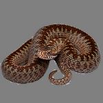 snake in spanish
