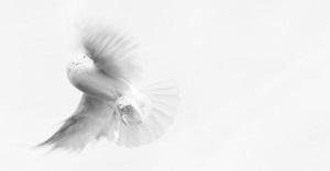 una colomba bianca spicca il volo