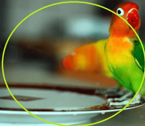 Makanan Burung Love Bird