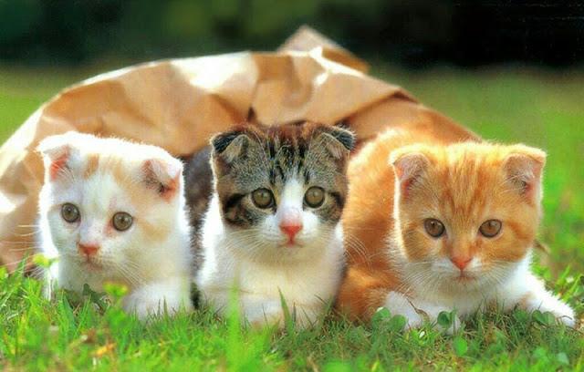 Con mèo số mấy? Mơ thấy mèo đánh con gì?