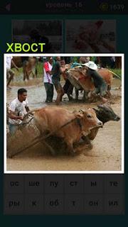 погонщик буйволов держит их за хвост в гонках по грязи 667 слов 16 уровень