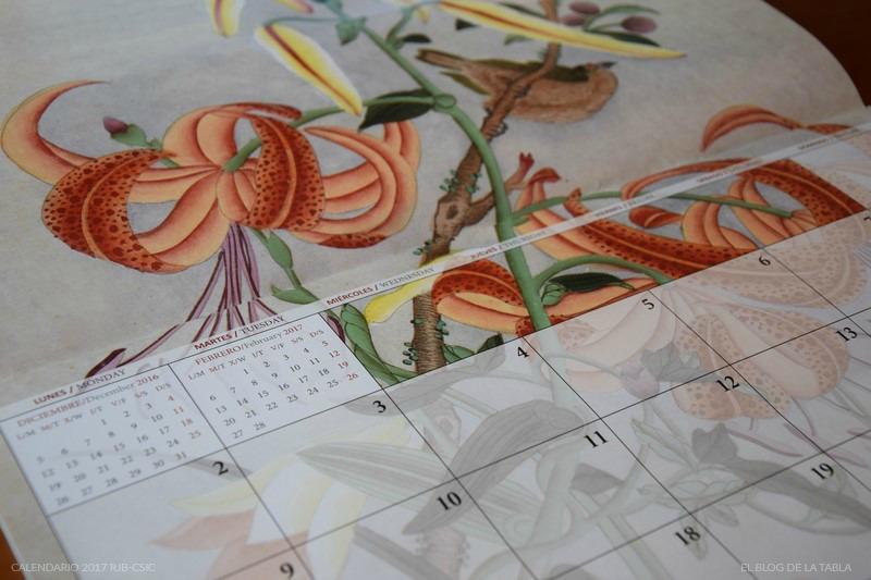 Lilium lancifolium (lirio tigre) Detalle calendario 2017 Real Jardin Botánico | Colección Van Berkhey
