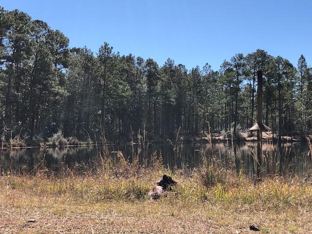 dog lying down near lake