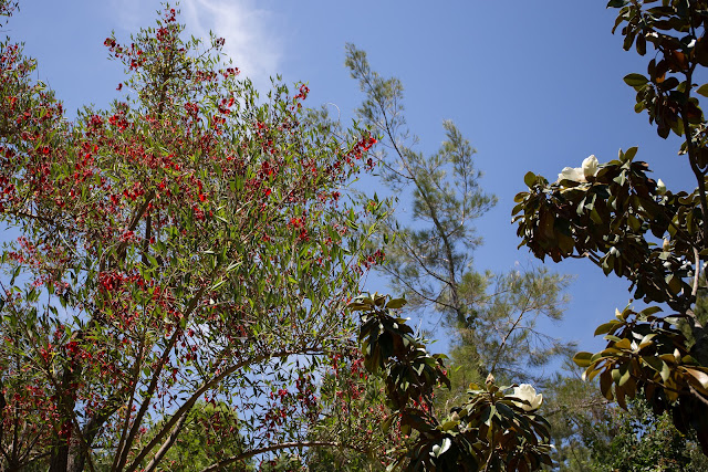 Ботанический сад Маримуртра (Jardí Botànic Marimurtra)