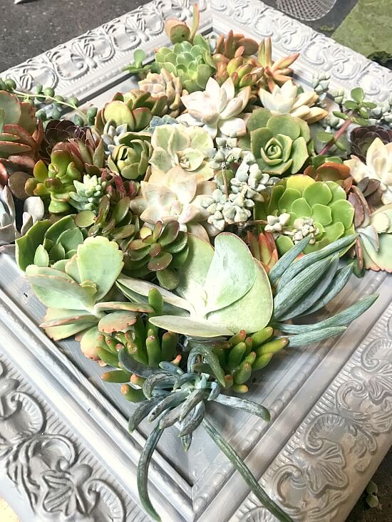 How to build an easy frame for succulents