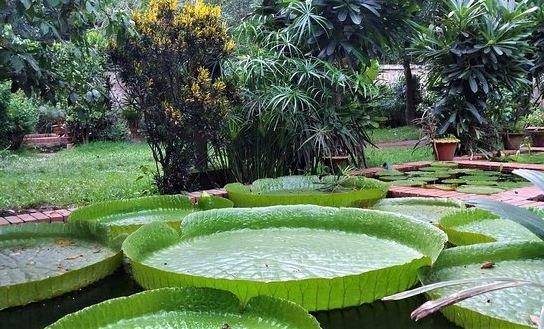 Boldha Garden
