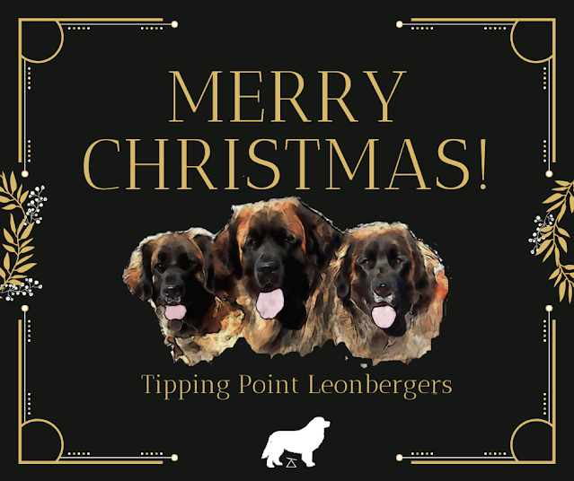 Tipping Point Leonbergers