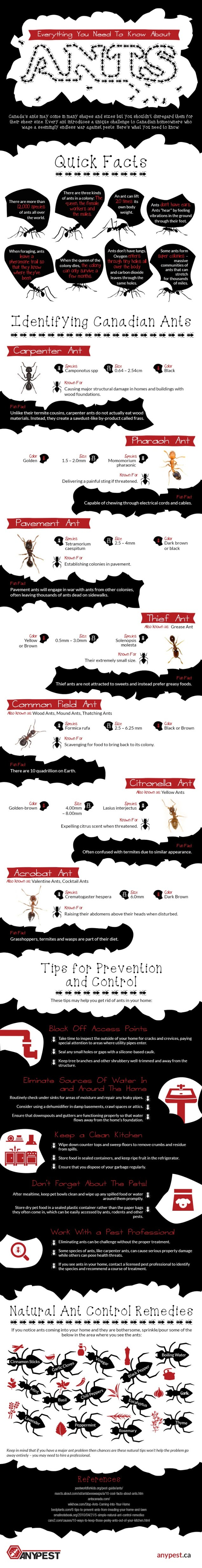 Everything You Need To Know About Ants #infographic