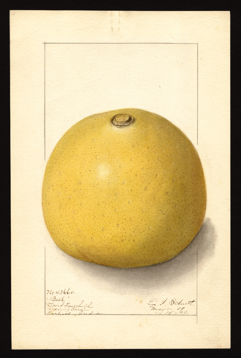 You Can Now Download 7,500 Watercolor Paintings of Every Known Fruit In The World In High Resolution