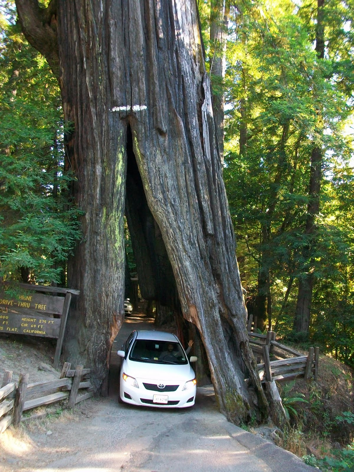 Wallpapers Unlimited Redwood National Park California