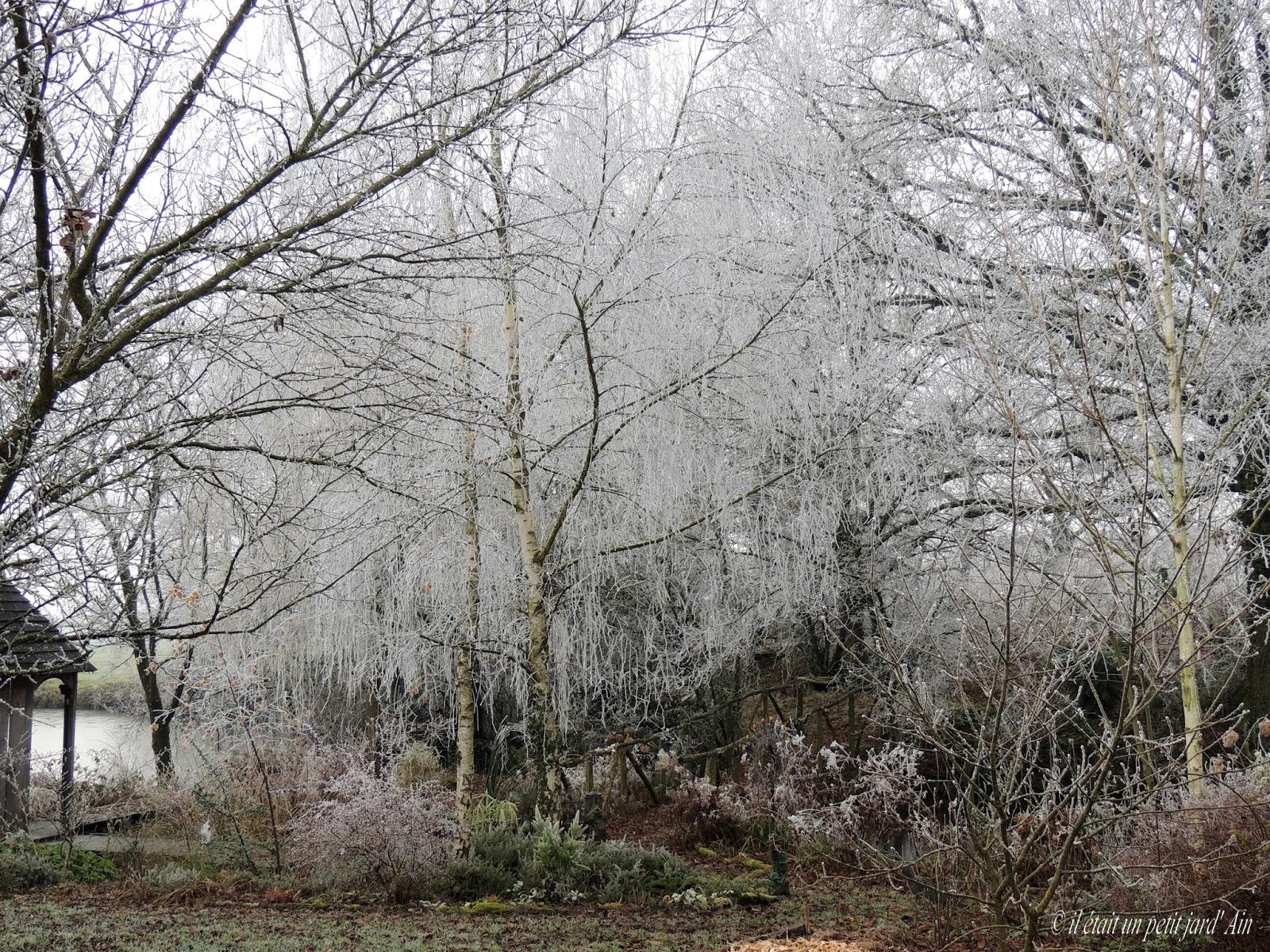 Il etait un petit jard 39 ain givree de jardin for Jardin anglais en hiver