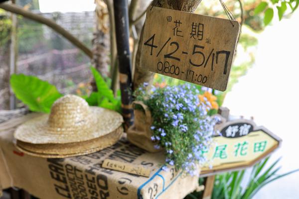 彰化田尾旅人小屋舒宿鳶尾花田,童話世界田園風光繽紛花朵好好拍
