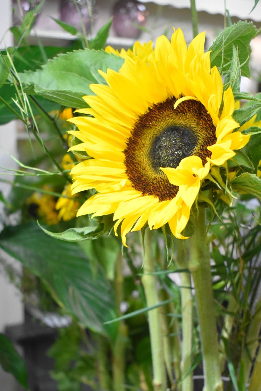 Katherine's Florists Newcastle Sunflowers