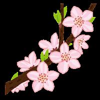 桃の開花のイラスト