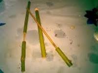Cara Membuat Pistol-pistolan dari Bambu.