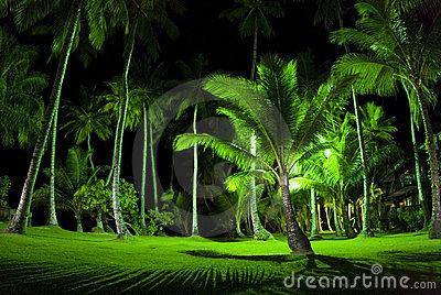 Mô phỏng hàng cọ xanh tại chung cư The Golden Palm