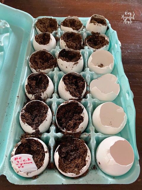 broken egg shells dirt seeds planting