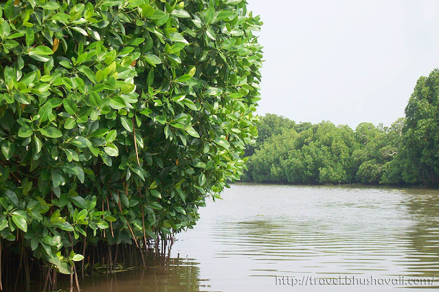 Pichavaram Mangrove Birds & Animals