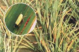 Hama dan Penyakit pada Tumbuhan