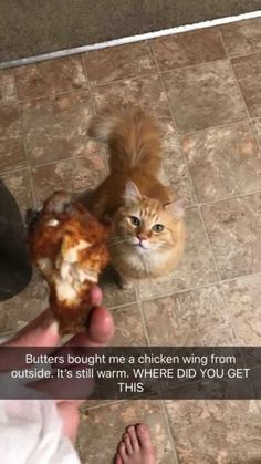 This cat brought its owner a warm chicken wing.