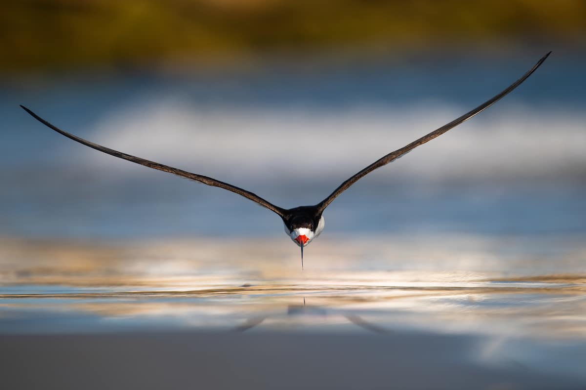 Mind-Blowing Pictures - Winners Of The 2019 Bird Photographer Of The Year Contest