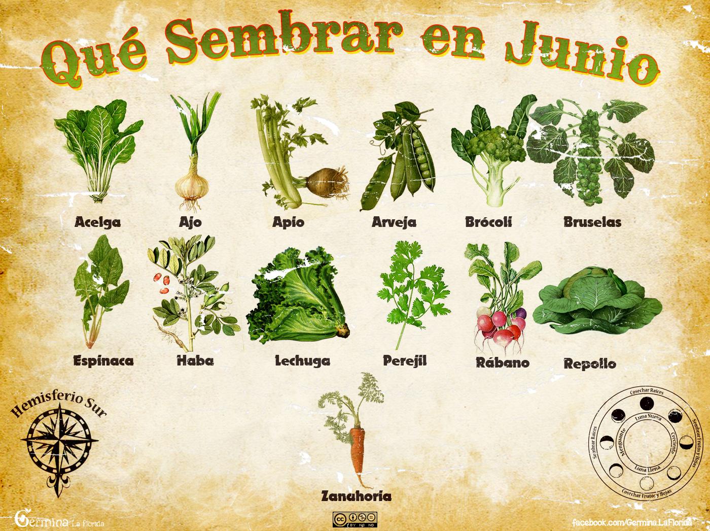 Germina la florida calendario de siembra de junio - Que plantar en el huerto ...
