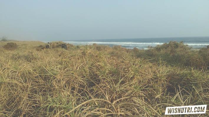 Jetty di Pantai Congot Kulonprogo