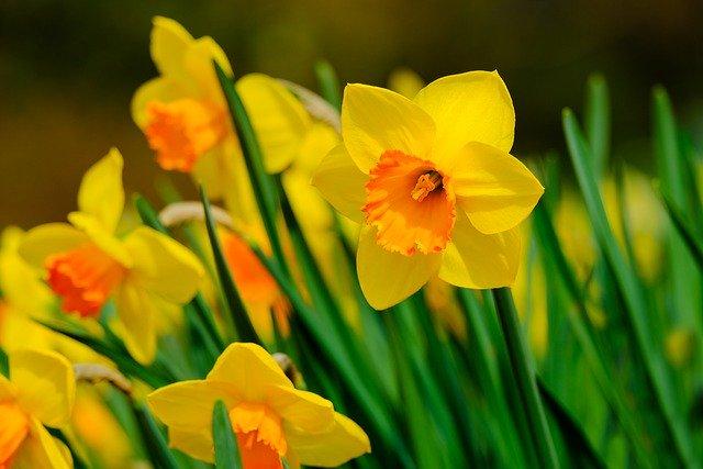 y nghia hoa thuy tien vang