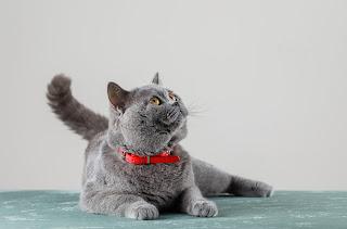 8 Tanaman Ini Berbahaya Untuk Kucing