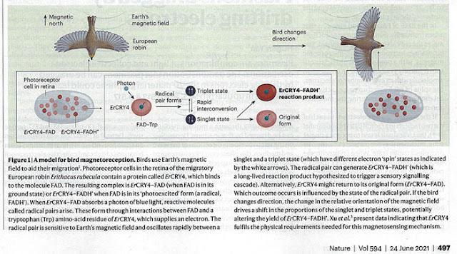 Making more progress on understanding animal magnetism (Source: E. Warrant, Nature, 24 June 2021)