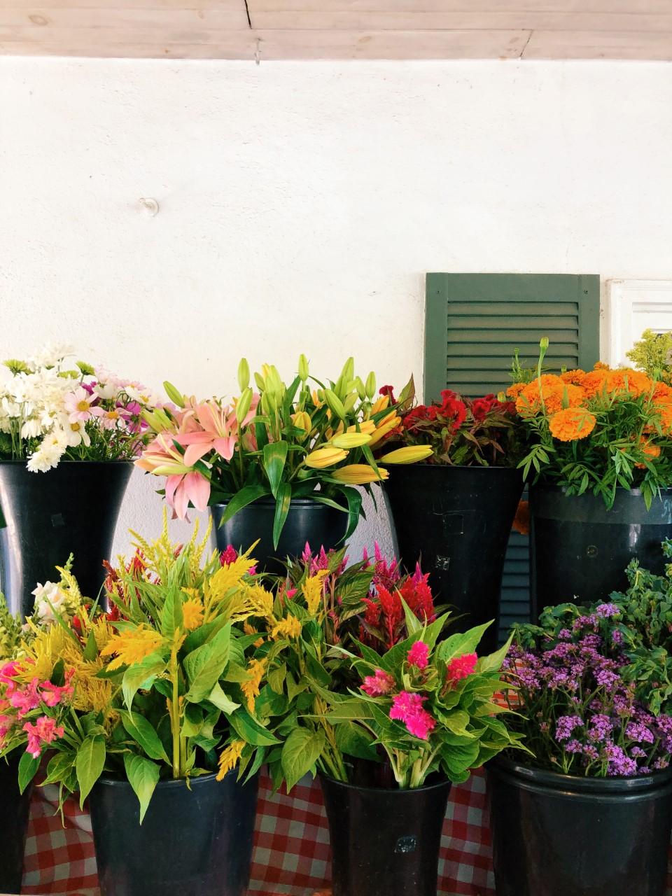Flower Picking at Maple Acres Farm   Organized Mess