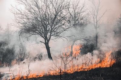 fire debris removal northern California