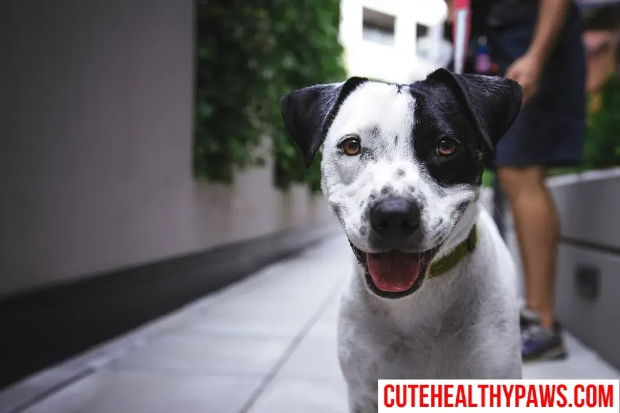 7 Ways Dogs Show Love