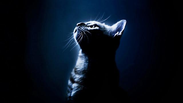 Fondo Hd de Gato - Fondo azul