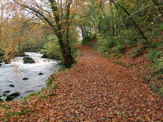 leaf strewn path by river bonet