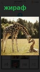 460 слов 4 большой жираф с детенышем в траве 15 уровень