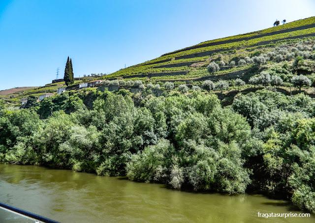 Os terraços de cultivo das vinhas (socalcos), no Vale do Rio Douro, entre Peso da Régua e Pinhão, Portugal