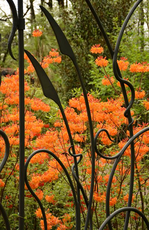 Atlanta Blooms! 2016 | Atlanta Botanical Garden
