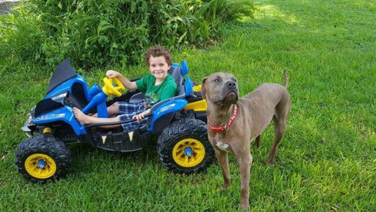 cachorros-quintal-avô-familia-criança-maternidade-filhos-amor